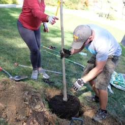 tree-planting-25-of-26